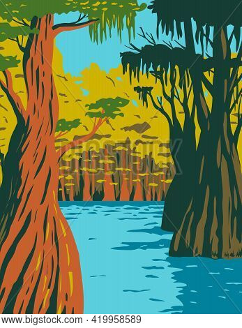 Wpa Poster Art Of Bald Cypress Growing In The Swamp Of Owl Creek In Apalachicola National Forest Loc