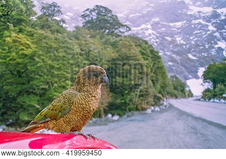 View Of A Kea Parrot On Top Of A Red Car In Fiordland, South Island, New Zealand