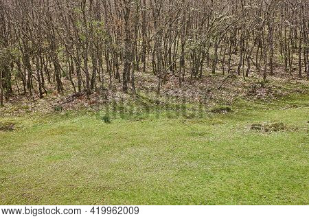 Deciduous Forest Sorrounded By Pasture In Summer Time. Outdoor