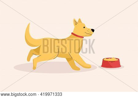 Happy Cute Dog Runs To His Bowl Of Food. Hungry Puppy Feeding