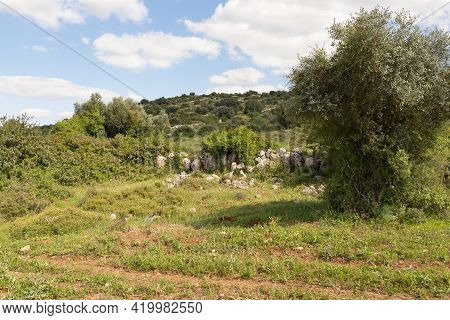 Nature Near The Excavations Of The Ancient Burial Caves Of The Sidonian Near The Maresha City In Bei