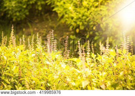 Nature Backdrop. Beautiful Meadow With Wild Flowers.  Summer Country Landscape With  Meadow And Sunb