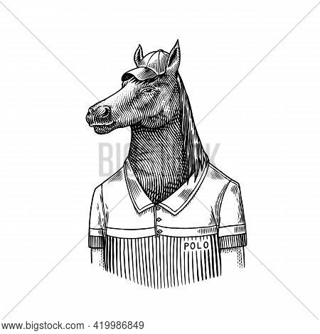 Horse Character In Coat. Dobbin Polo Player. Fashionable Animal, Vitorian Gentleman In A Jacket. Han