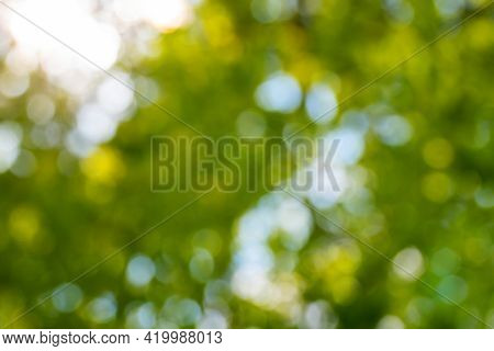 Abstract Blurred Nature Background, Defocused Lush Green Foliage Against Blue Sky And Golden Sunligh