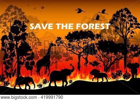Burning Forest Spruces In Fire Flames. Wild Fire In The Night Forest. Natural Disaster. Wildfire. Bl