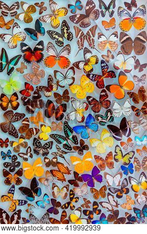 Amazing Beauty of a Different Butterflies Isolated on White Background. Lepidopterology and Entomology.