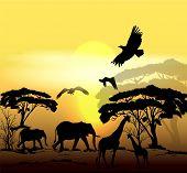 Vector savanna scene Beautiful Vector Savanna Scene With Sunrise, Trees And Animals Silhouettes poster
