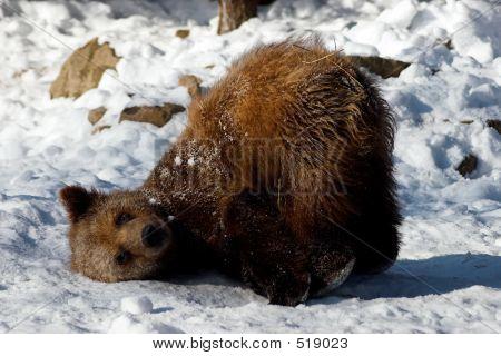 Tierische Bärenjunge