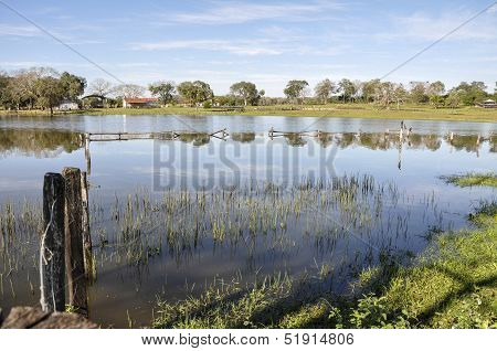 Brazil, Pantanal, Flooded Farm
