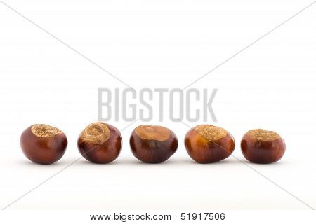 Line of Conkers