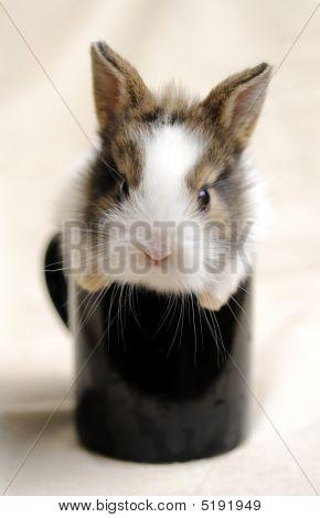 Portrait Of A Rabbit