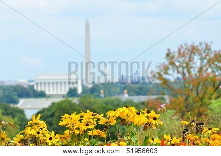 Washington DC skyline in autumn with flowers foreground