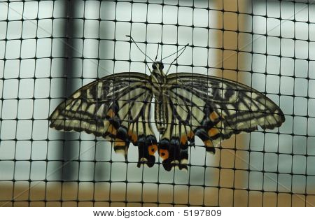 Butterfly Fence