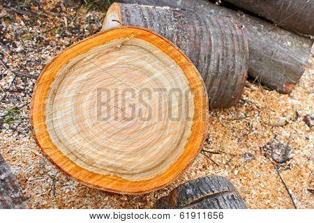 Heap Of Firewood Cutting Logs