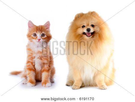 Kat en hond rode kleur