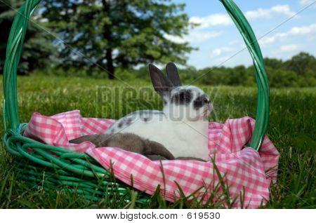 Mini In A Basket