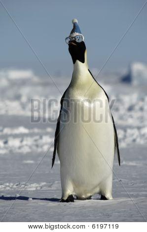 Winter Penguin With Sunglasses