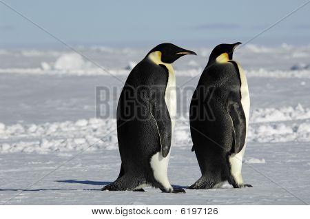 Penguin Couple