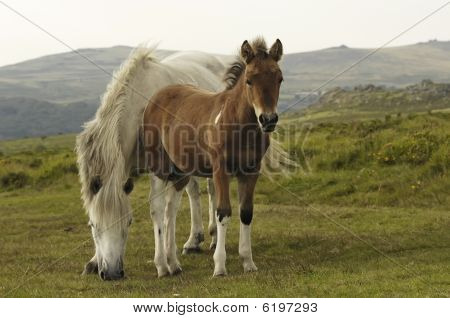 Horse With Foil