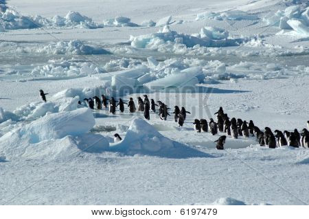 Penguin Group Leader