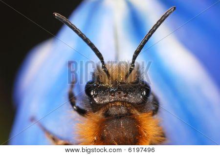 Bee Portrait