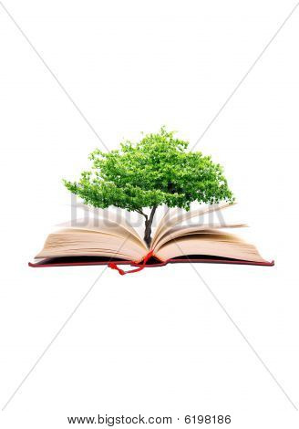 Tree In The Book