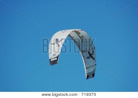 Grey Kite