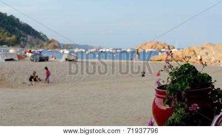 Geranium At Playa Grande Beach