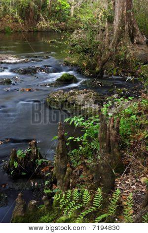Cypress Knees on the Hillsborough River