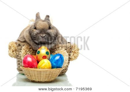 Little cute Easter bunny sitting in a basket. In front of him is a small basket full of colored easter eggs. Isolated on white background. poster