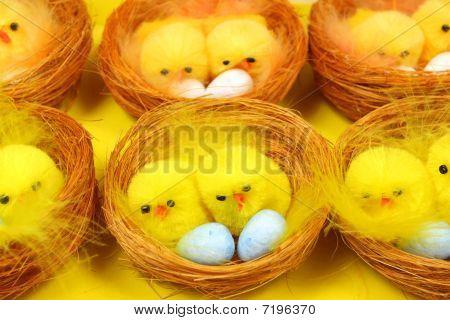 Chicks In Nests