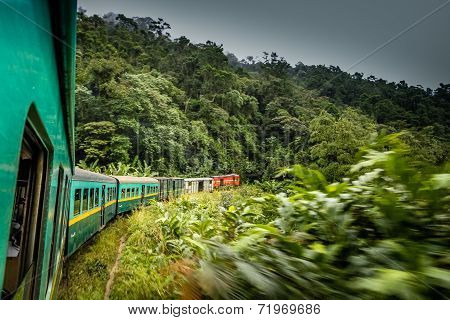 Tropical train