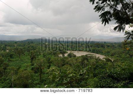 View On River Napo