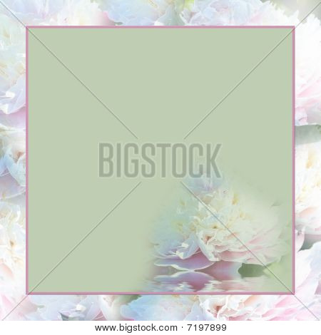 Square Background Peonies