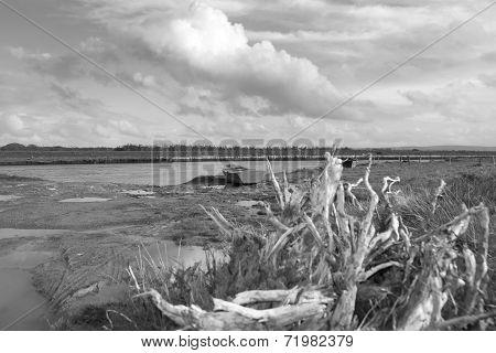 Bog Oak And Old Rowing Boats