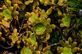 Green Succulent Flower of a Cactus Plant poster