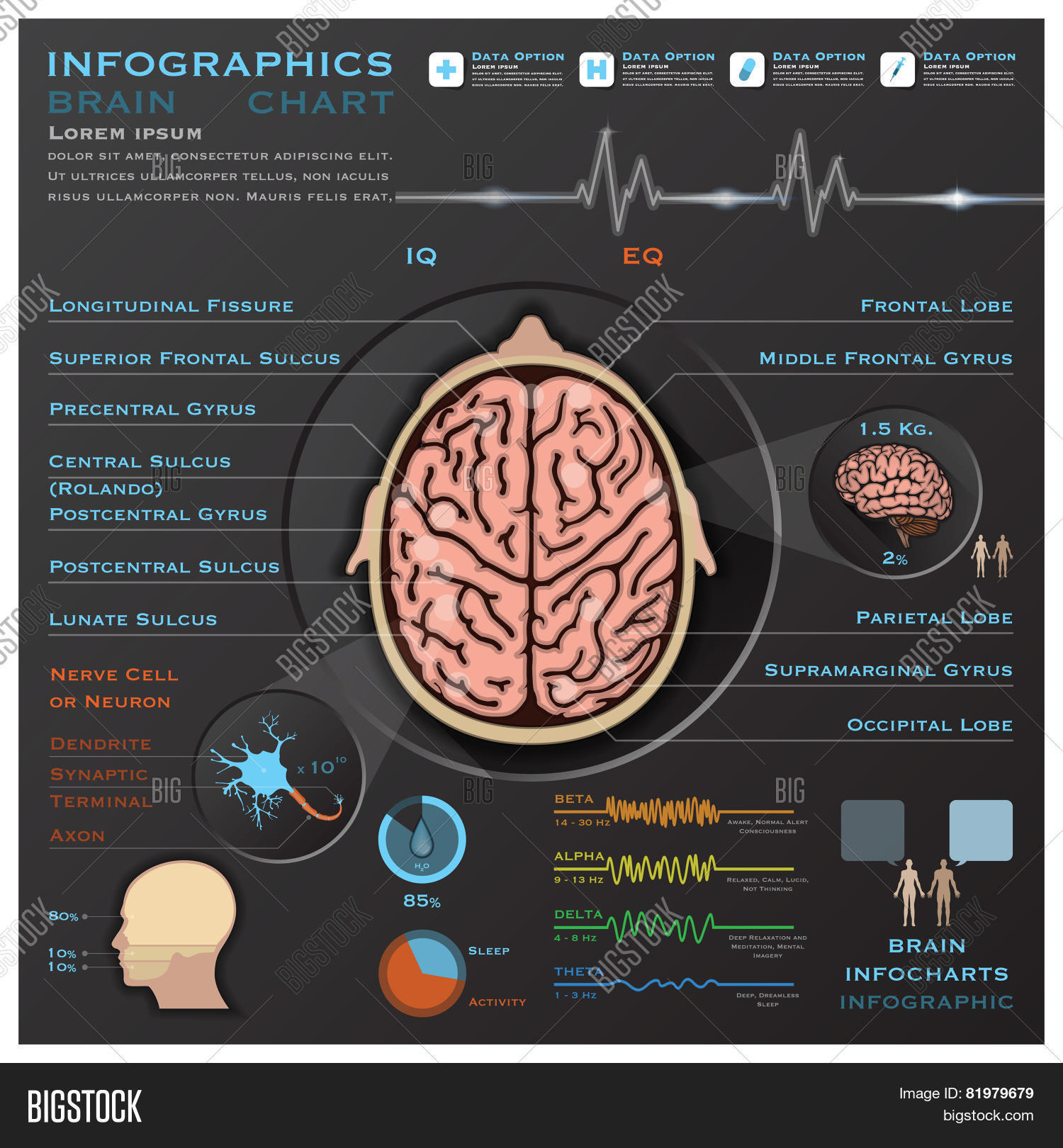 Brain Nervous System Vector & Photo (Free Trial) | Bigstock