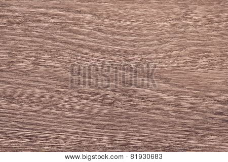 Longitudinal Section Tree Of Terracotta Color