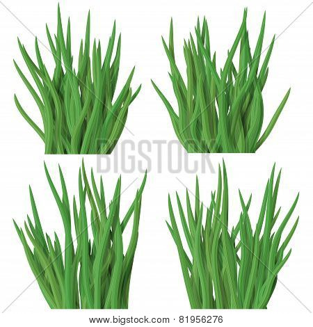 Set Of Grass Tussock Isolated On White Background
