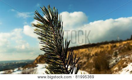 Detail of a spruce twig with a stone quarry in the background