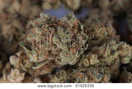 Close up macro image of Mother's Helper Marijuana
