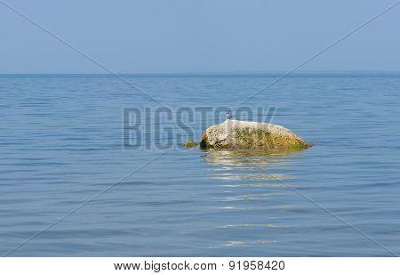 River scenery - stone and common tern bird