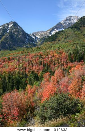 Fall Colors At Sundance, Provo, Utah