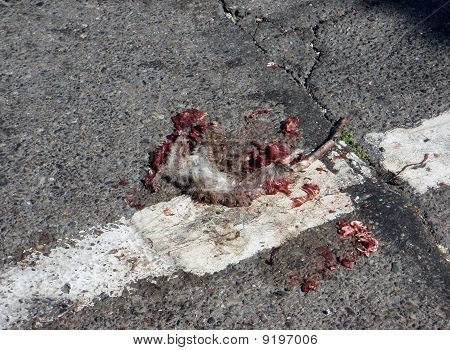 Rodent Roadkill In The City