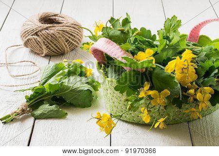 Preparation Of Medicinal Plants - Celandine For Drying