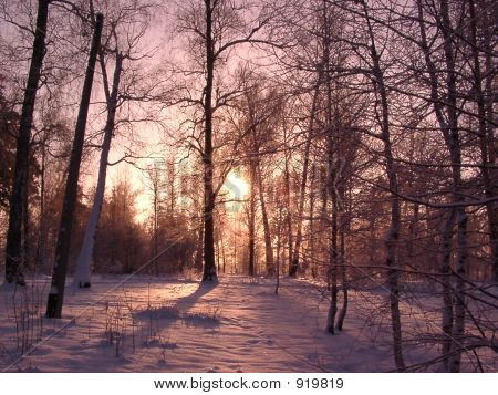 Winter Morning Through Pink Glasses