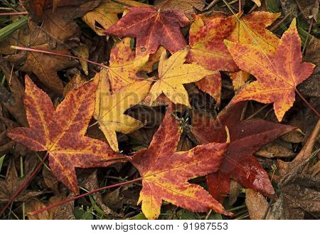 Autumnal Ground
