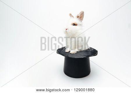 Rabbit in a hat isolated on a white background