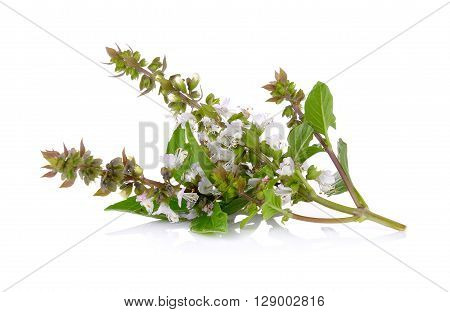A Sweet Basil flower on white background