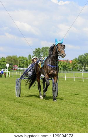WROCLAW, POLAND - MAY 8: Presentation of the horses before the race for 3-year-old and older sulki  on 8 May 2016 in Wroclaw, Poland. This is an annual race on the Partenice track open to the public.